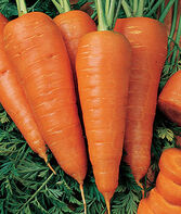 Carrot, Sweet Treat Hybrid, , large